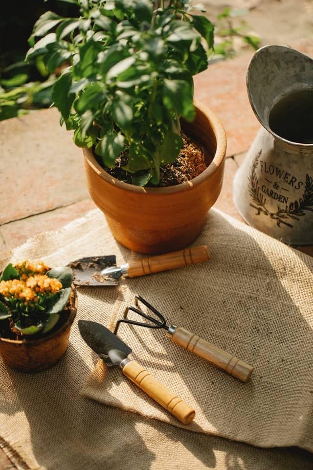 Start a new hobby by gardening