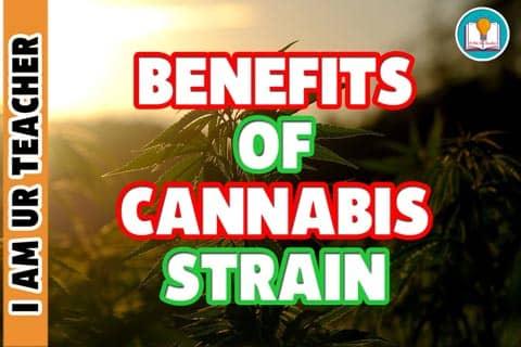 Benefits of cannabis strain