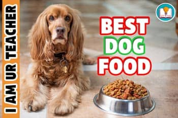 The Complete Guide to Finding The Best Dog Food In 2021